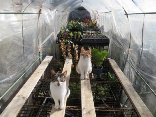 12月、簡易ビニールハウスの中に野良子猫が入り込み温まっています♪2019.12.03