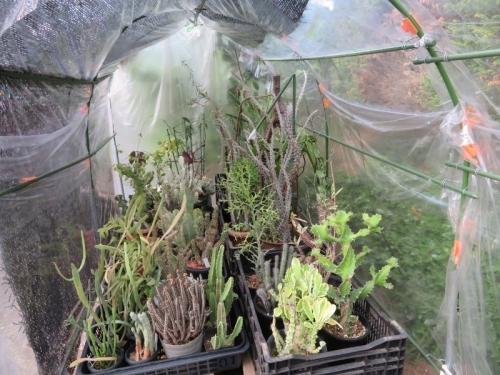 冬期、室内暖房部屋で冬越した観葉、多肉植物いろいろ屋外にようやく出しました。2020.04.28