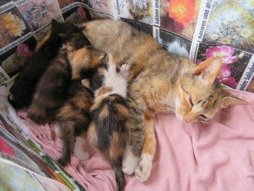 野良猫三毛子さんが4月8日に4匹子供も産みました。生後25日目、お目目がパッチリ可愛いです。2020.05.03