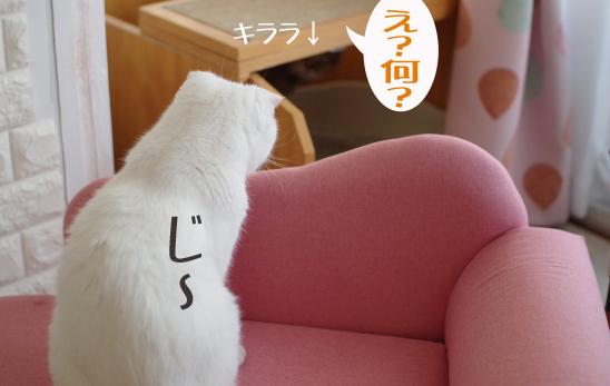 ういん (2)のコピー