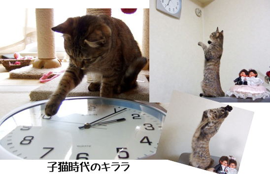 子猫じだいjjghj未設定 1のコピー