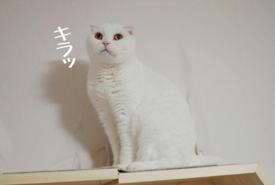 きdrコピー - コピー