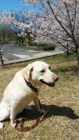 ユッカちゃんと桜IMG_20200406_112920