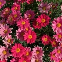 お花IMG_1003