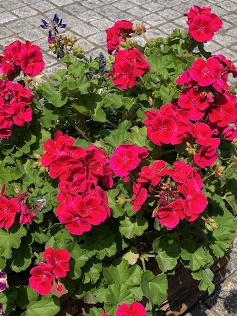 マンションの花IMG_1056