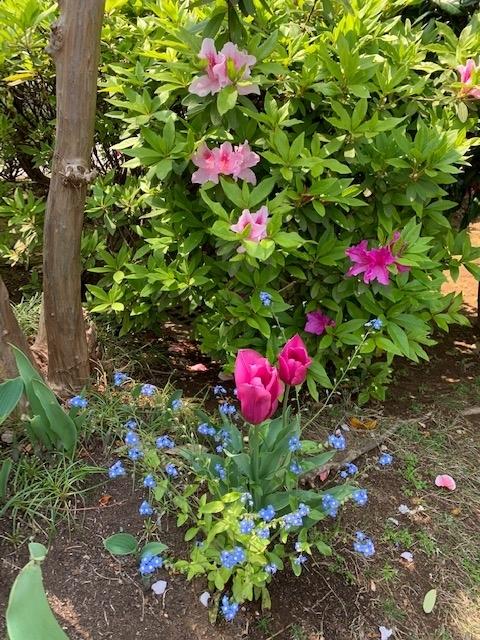 春の色IMG_1052