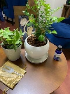 参加した植物IMG_1203