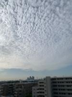 今朝の空2IMG_1294