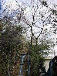 200111_19樹木