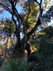 200311_17樹木
