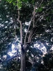 200311_18樹木