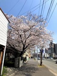200410_02桜