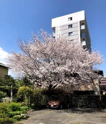 200410_06桜