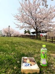200410_10桜と弁当