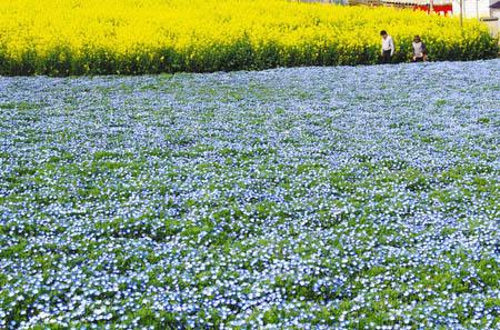 0415鼻高展望花の丘
