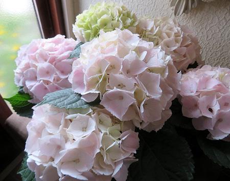 0511白・ピンク・緑