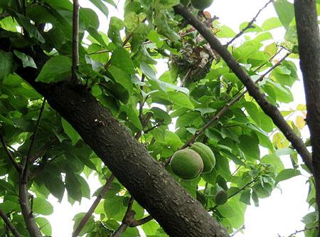 0517杏子1