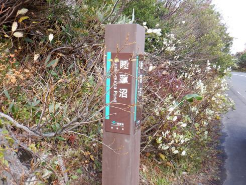 八甲田睡蓮沼2019-1