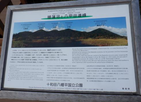 八甲田睡蓮沼2019-3