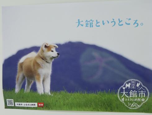 秋田犬の里2019-3
