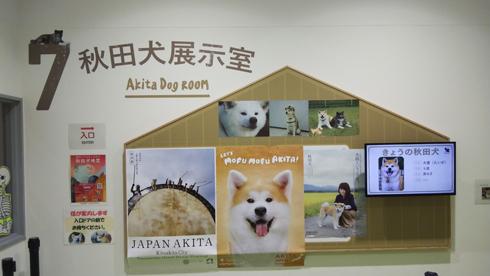 秋田犬の里2019-8