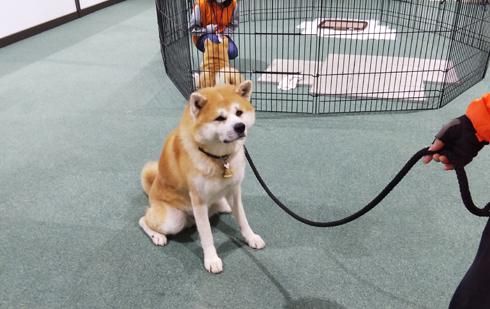 秋田犬の里2019-11