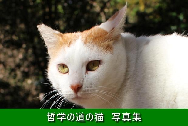 620-哲学の道の猫写真集