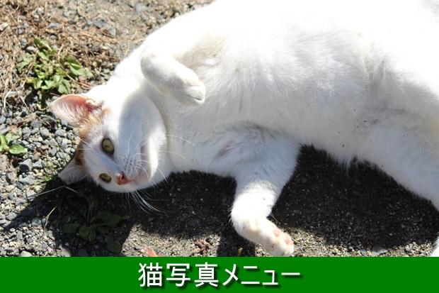620-猫メニュー