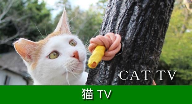 620猫TV
