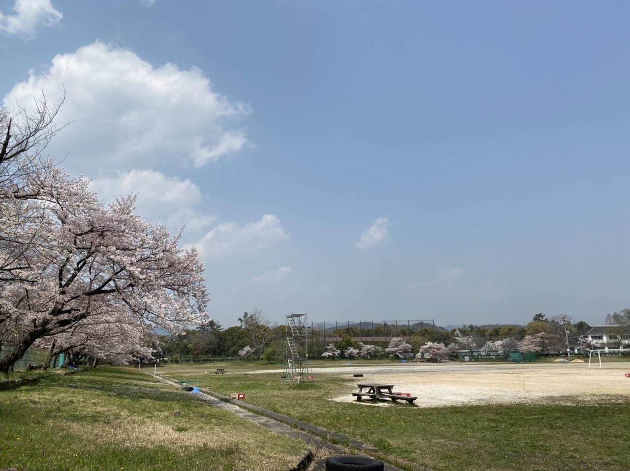 グラウンド桜