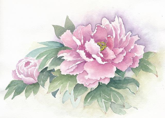s-牡丹の花
