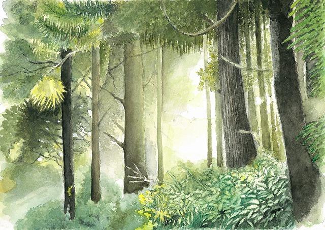 s-森の中