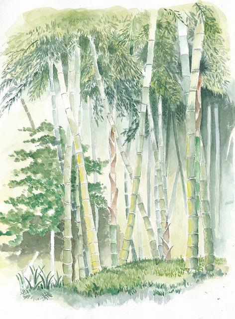 s-竹林 と光芒