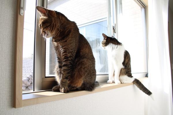 猫は窓辺で猫を被る
