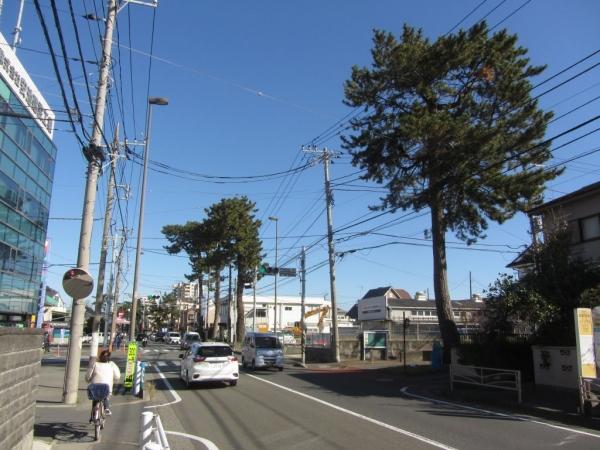 酒匂・小八幡の東海道松並木