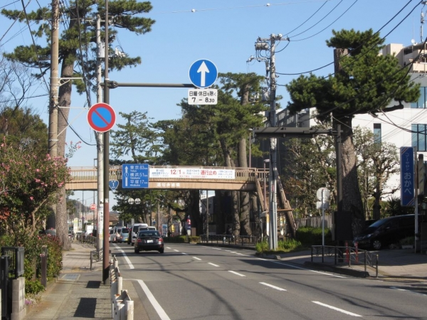 酒匂の東海道松並木