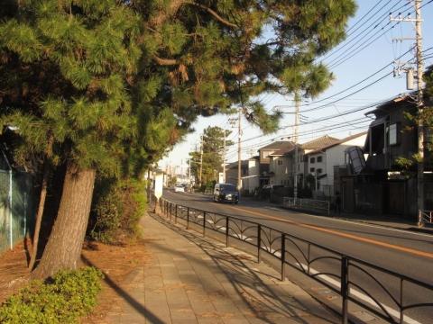 山西・二宮の東海道松並木