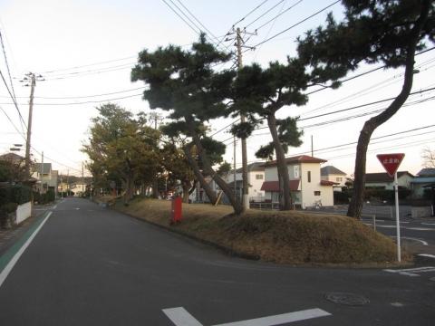 国府本郷の松並木