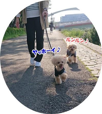 ウキウキ散歩