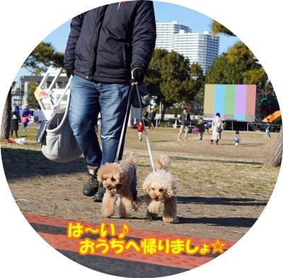 DSC02305_202004152255018a1.jpg