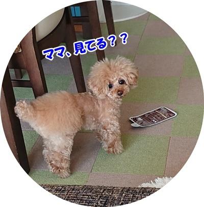 DSC_8698.jpg