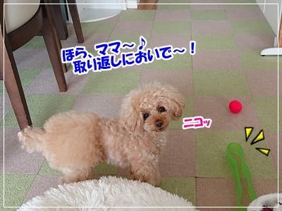 DSC_8831.jpg