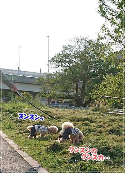 DSC_8912.jpg