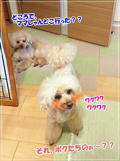 DSC_9102.jpg