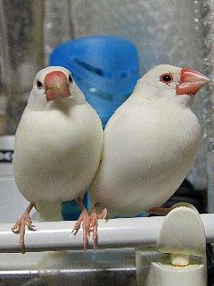 放鳥は楽しいね~♪