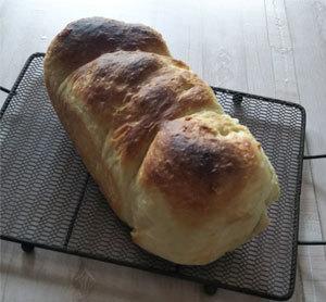 チビ食パン1