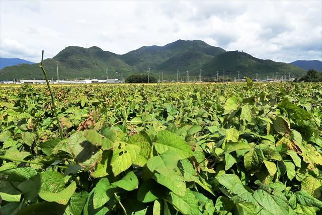 191020-黒豆収穫祭-02-S