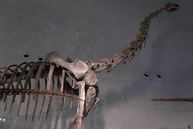 191110-恐竜博物館-010-S