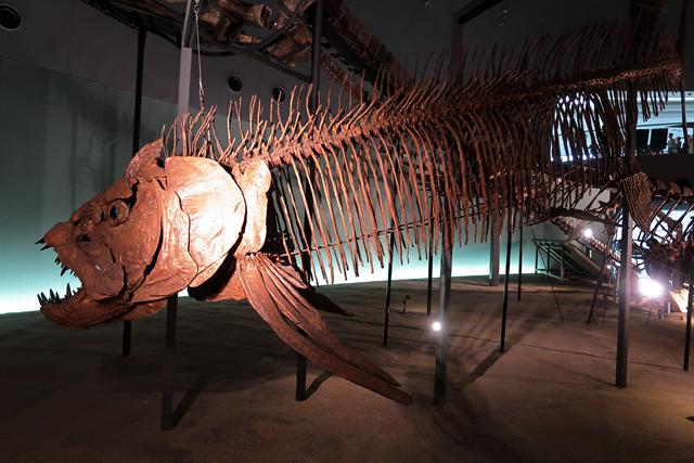 191110-恐竜博物館-012-S