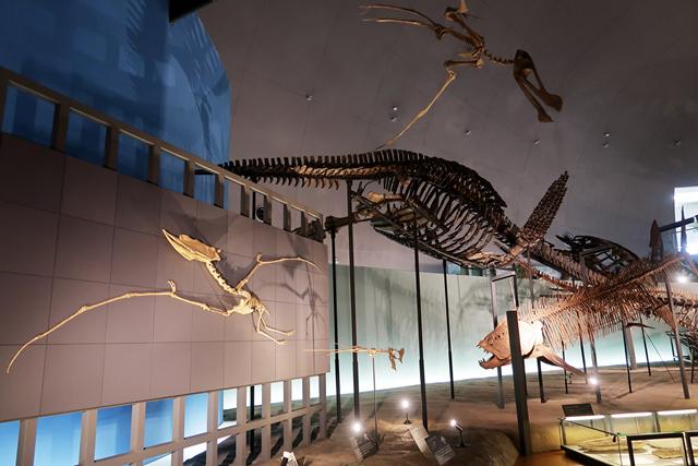 191110-恐竜博物館-013-S
